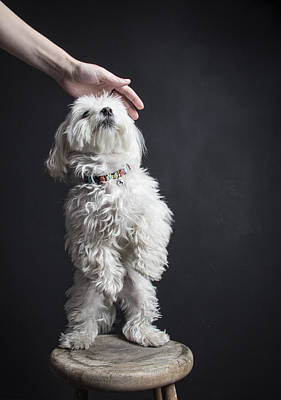 Pet Me Human Original by Encore Photography