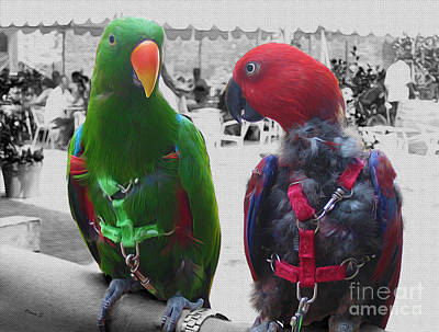 Photograph - Pet Parrots In A Cafe by Nina Silver