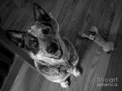 Photograph - Pet Portrait - Forrest by Laura  Wong-Rose