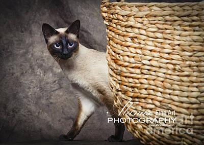 Photograph - Pet Portraits by Alana Ranney