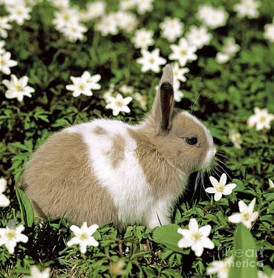Pet Rabbit Art Print by Hans Reinhard/Okapia