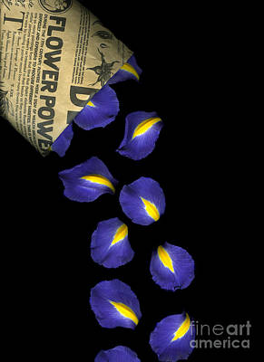 Black Background Photograph - Petal Chips by Christian Slanec