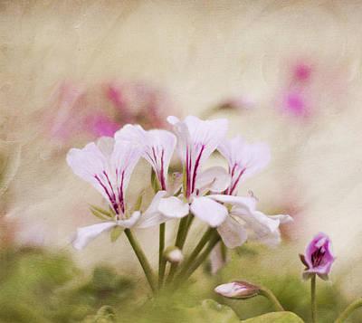 Photograph - Petal Pink by Cathie Richardson