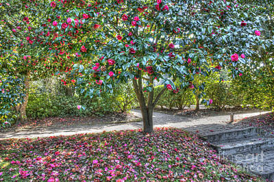 Photograph - Petal Power by Dale Powell