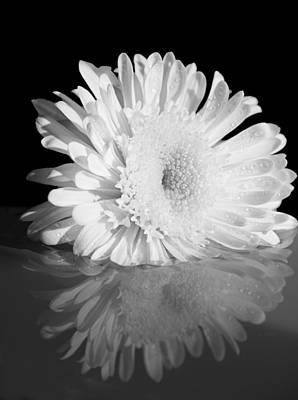 Daysray Photograph - Petal Reflections by Fran Riley