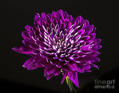 Photograph - Petals by Alana Ranney