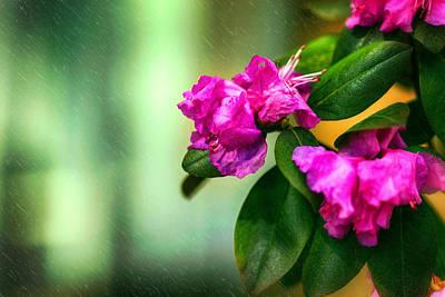 Photograph - Petals And More by Sennie Pierson