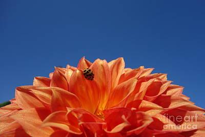 The Blue Dahlia Photograph - Petals For A Lady by Jacqueline Athmann