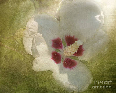 Petals In Shadows Art Print by Kathi Mirto