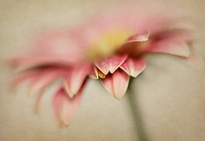 Photograph - Petals In The Mist by David and Carol Kelly