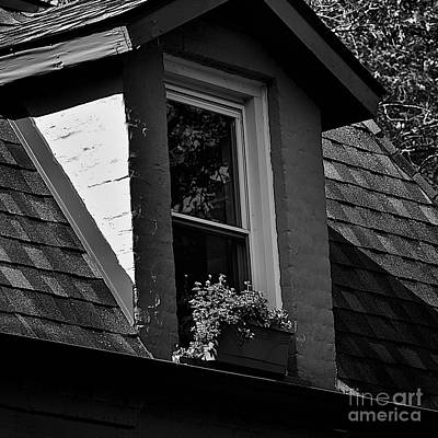 Photograph - Petals In The View - Black And White by Frank J Casella