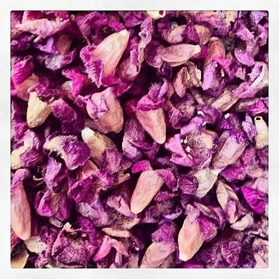 Lavender Photograph - Petals by Judi FitzPatrick