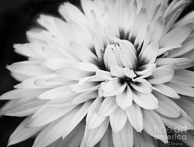 Photograph - Petals by Nancy Dempsey