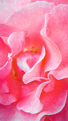 Photograph - Petals Of My Love by Roxy Hurtubise