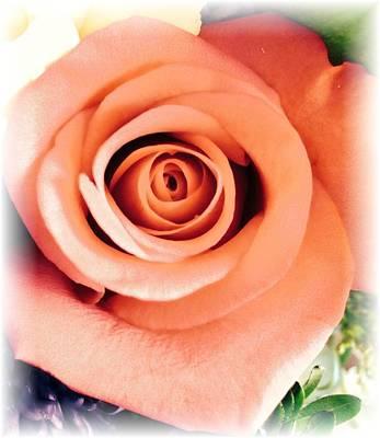 Petals Of Peach Art Print