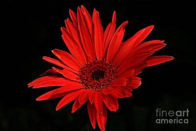 Photograph - Petals On Fire by Marcia Lee Jones