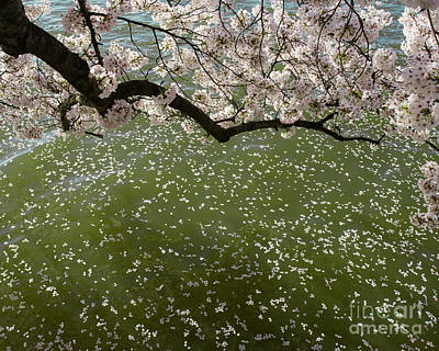 Photograph - Petals On The Water by Dale Nelson