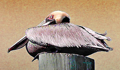 Photograph - Pete The Pelican On The Pier by Duane McCullough