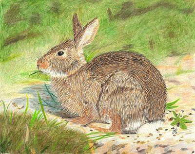 Drawing - Peter Cottontail by Sheila Byers