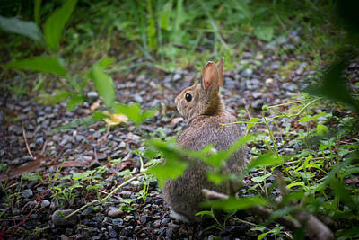Photograph - Peter Has Big Eyes by Ronda Broatch