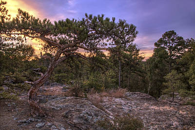 Photograph - Petit Jean Mountain Bonsai Tree - Arkansas by Jason Politte