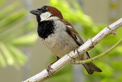 Photograph - Petite Bird On A Branch by Bob Slitzan