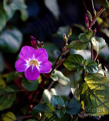 Photograph - Petite Fleur by Patricia Griffin Brett