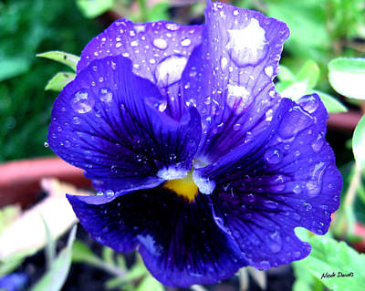 Photograph - Petite Pansy by Nicole Daniels