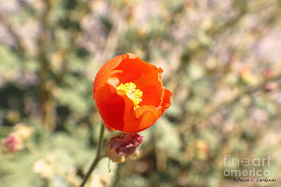 Photograph - Petite Tangerine by Rebecca Christine Cardenas