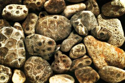 Decorative Fossil Photograph - Petoskey Stones Vlll by Michelle Calkins