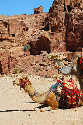 Digital Art - Petra Camel by Eva Kaufman