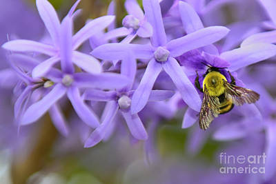 Photograph - Petrea Racemosa And Bumblebee by Olga Hamilton