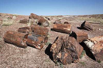 Petrified Forest Arizona Photograph - Petrified Forest by Adam Hart-davis