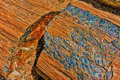 Petrified Forest Logs Art Print by Bob and Nadine Johnston