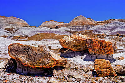 Print featuring the photograph Petrified Forest - Painted Desert by Bob and Nadine Johnston