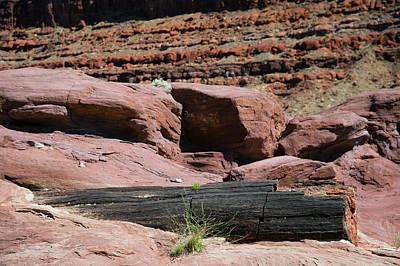 Petrified Wood Photograph - Petrified Log And Sandstone by Jim West