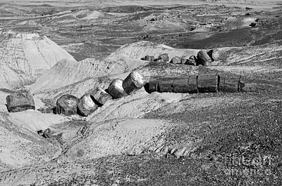 Photograph - Petrified Log Segments Petrified Forest National Park Arizona Black And White by Shawn O'Brien