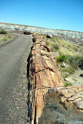 Photograph - Petrified Log by Susan Woodward