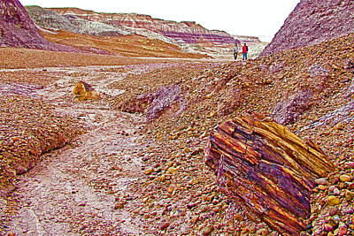 Petrified Logs On Blue Mesa Trail In Petrified Forest National Park-arizona Original