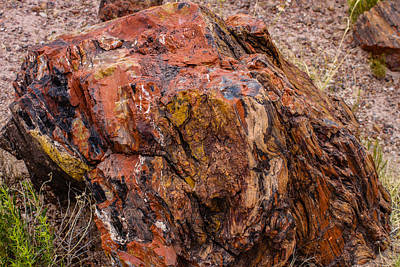 Photograph - Petrified Wood 2 by Robert Hebert