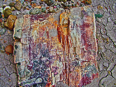 Petrified Wood Along Blue Mesa Trail In Petrified Forest Natioaal Park-arizona Original
