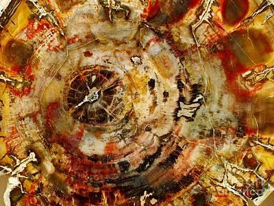 Petrified Wood Art Print by Deb Schense