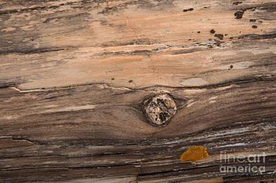 Petrified Wood Detail Art Print by Vivian Christopher