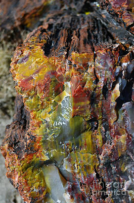 Crystals Photograph - Petrified Wood Macro At Petrified Forest National Park by Shawn O'Brien