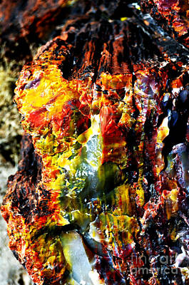 Photograph - Petrified Wood Macro At Petrified Forest National Park Vivid Color by Shawn O'Brien
