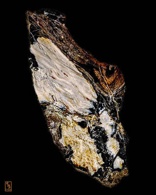 Cabochon Photograph - Petrified Wood Opus01 by Rock Hound