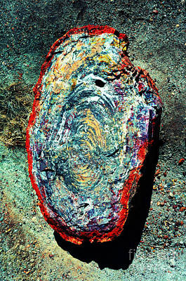 Petrified Wood Rainbow Cross Section Macro At Petrified Forest National Park Vivid Art Print