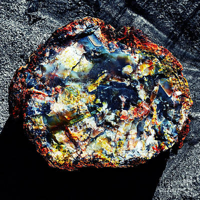 Photograph - Petrified Wood Rainbow Cross Section Macro Petrified Forest National Park Square Vivid Color Splash by Shawn O'Brien