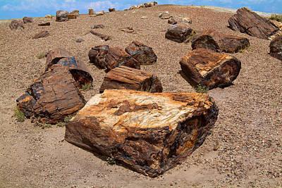 Photograph - Petrified Wood  by Richard J Cassato