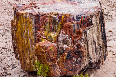Photograph - Petrified Wood by Robert Hebert